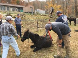 One of the horses rescued in a recent animal abuse case collapsed this past week, and members of Bakersville Fire and Rescue, the sheriff's office and Mitchell County Emergency Management used the boom truck belonging to Young's Fuel to get the horse back on her feet using a harness. (Submitted)